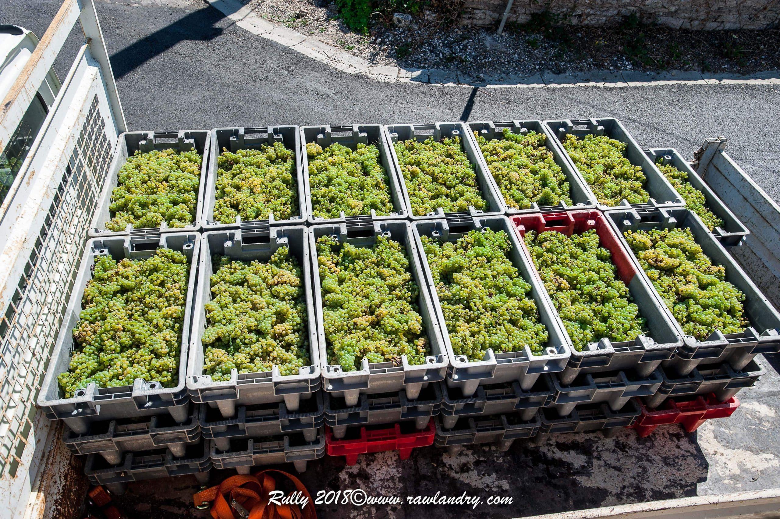 Caisse de Chardonnay